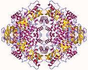 enzima piruvato quinasa