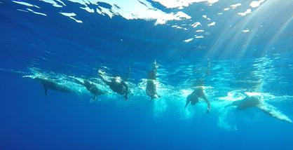 Nadadors MGDA 2