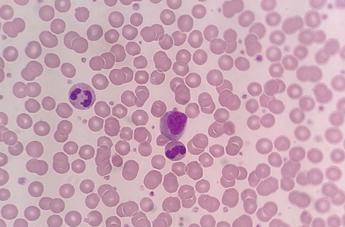 LMC cell