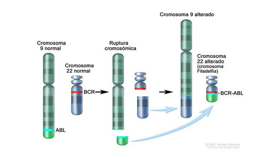 oncogén de fusión BCR ABL