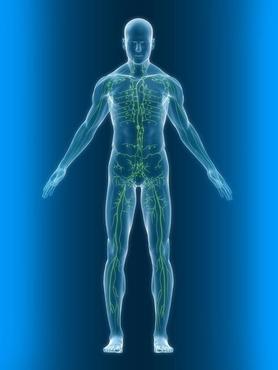 Sistema limfàtic
